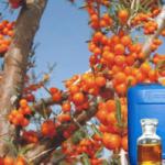 seabuckthorn oil