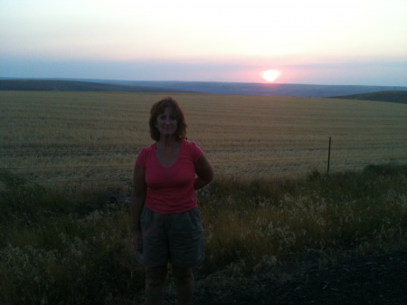 Sunset in wheat country